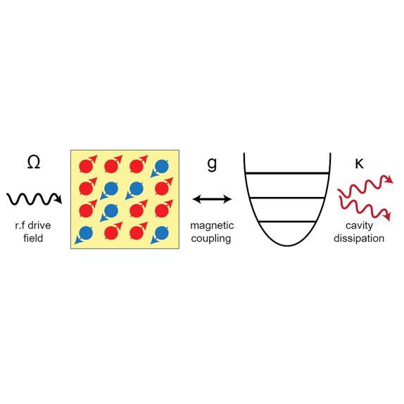 Quantum Dynamics of Cavity Interactions with Spin Ensembles