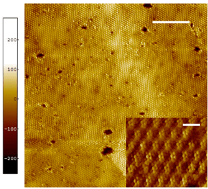 Scanning Tunneling Microscopy of Quantum Materials, Devices and Molecules